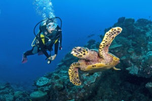 Seychelles outer islands diving4