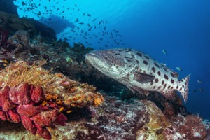 Seychelles outer islands diving5