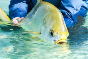 Seychelles outer islands fishing22