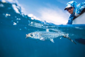 Seychelles outer islands fishing8