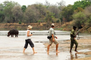 zambia north luangwa national park safari mwaleshi camp 1
