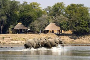zambia south luangwa national park nsefu camp 3