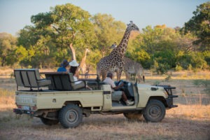 zambia south luangwa national park nsefu camp 4