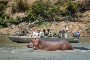 zambia south luangwa national park river journeys emerald season 21